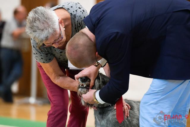 Schnauzer und Pinscher Clubschau | Schnauzer und Pinscher Clubschau in Wangen an der Aare 02.09.2018. Foto: Leo Wyden