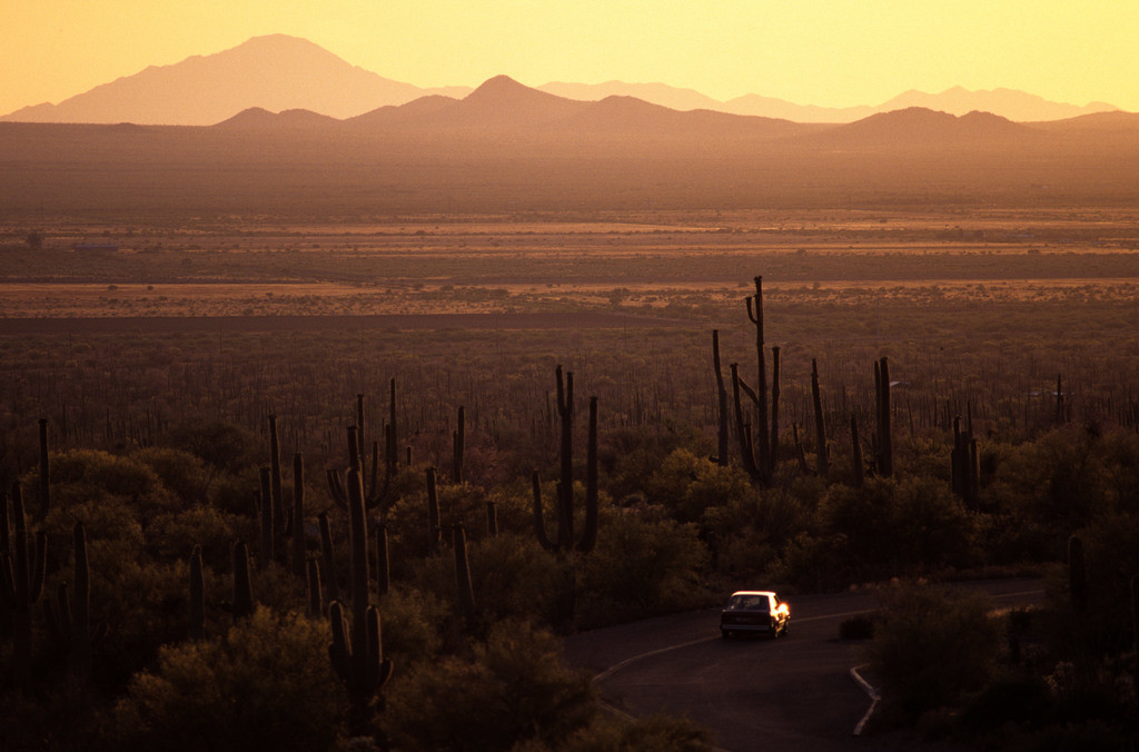 JT030403-039.JPG | USA, Vereinigte Staaten von Amerika, Arizona: Schotterpiste im Saguaro National Park bei Tucson, Sonnenuntergang.