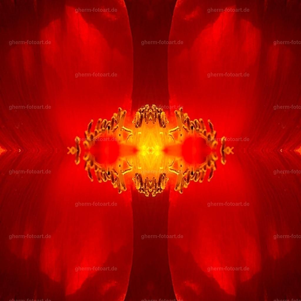 IMG00156-LR-korr-q-lmnr-kaleidoskop-2