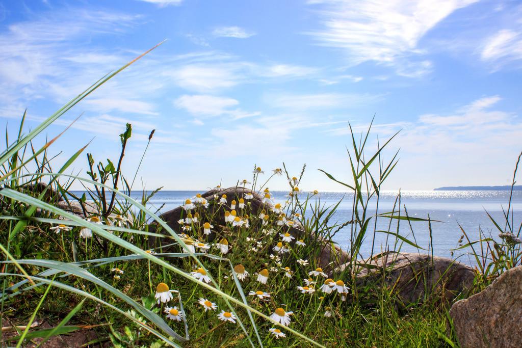 Strand in Lehmberg | Blumen am Strand in Lehmberg