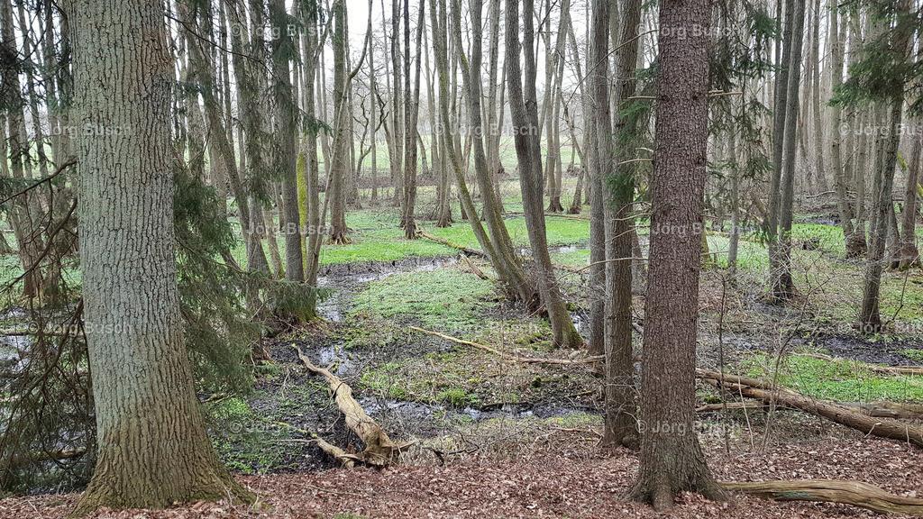 Wald_5