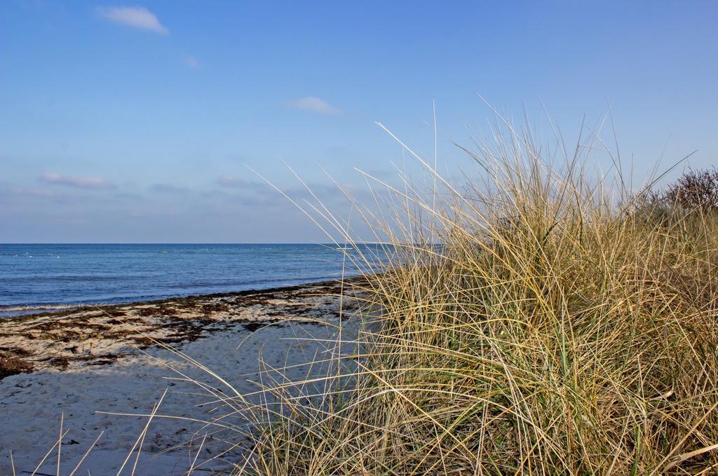 Strand in Grönwohld | Strandgras am Strand in Grönwohld