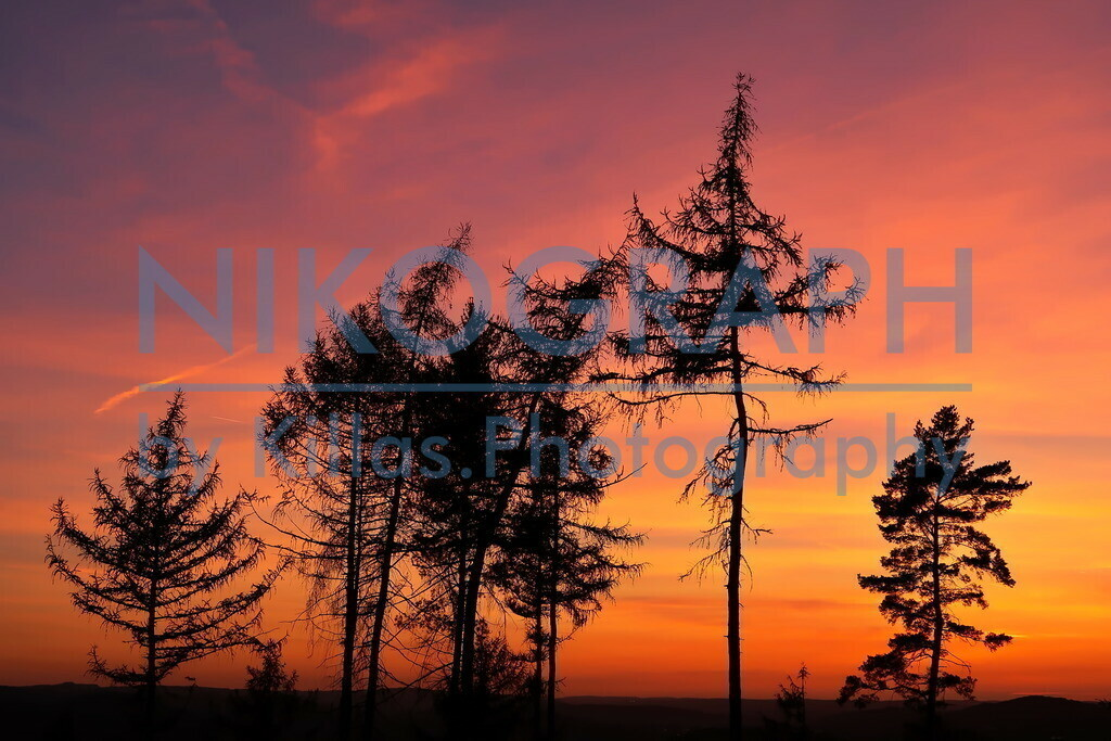 Sunset | Silhouette von Bäumen des Iserlohner Stadtwaldes während des Sonnenunterganges.