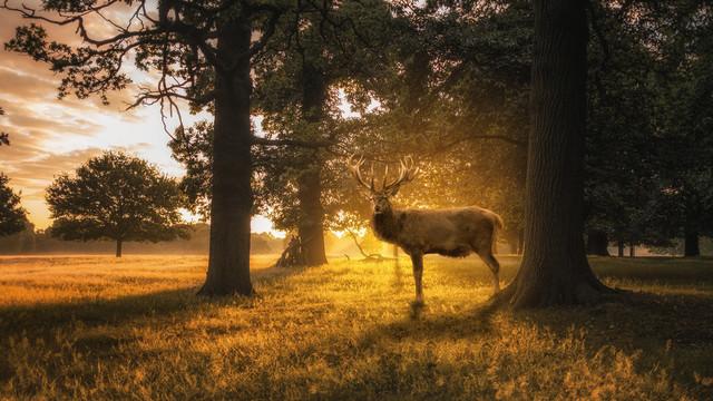 Hisch im Sonnenuntergang