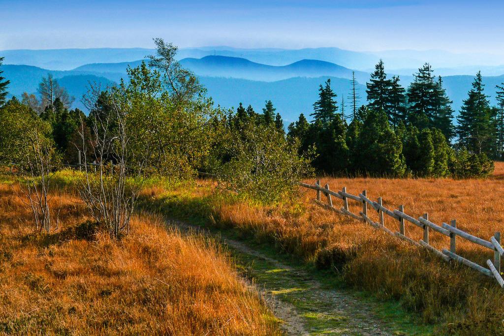 Foto_MS | Naturschutzgebiet Schliffkopf