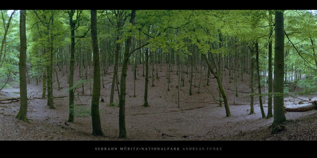 Poster Serrahn Müritz-Nationalpark   Poster oder Wandbild mit Buchen im Buchenwald und Weltnaturerbe Serrahn im Müritz Nationalpark kaufen
