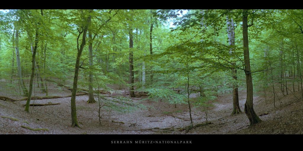 Serrahn Müritz-Nationalpark | Buchen im Buchenwald und Weltnaturerbe Serrahn im Müritz Nationalpark