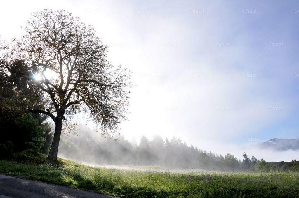 Baum-Nebel-Mai12_004_1