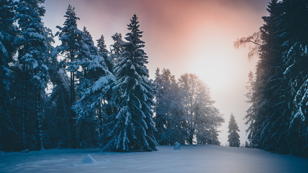 Wintertraum | Wintertraum im Schwarzwald