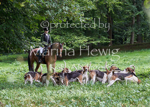 Jagd Perdoel  214529_Marina Hewig