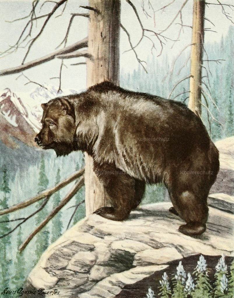 Fuertes_ L.A. (1874-1927) - Burgess Animal Book for Children 1920 - Grizzly Bear