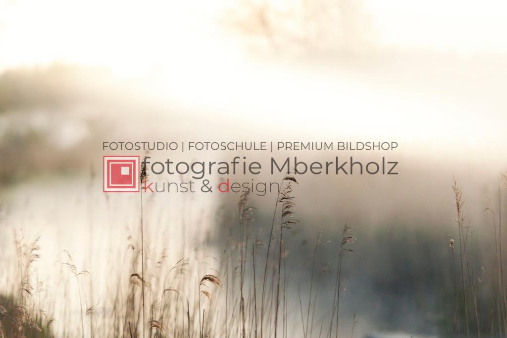 _Marko_Berkholz_mberkholz_usedom_MBE9191 | Die Bildergalerie Natur des Warnemünder Fotografen Marko Die Bildergalerie Natur des Warnemünder Fotografen Marko Berkholz zeigt Motive unser vielfältigen und abwechslungsreichen Landschaften, Tier- und Pflanzenwelt.