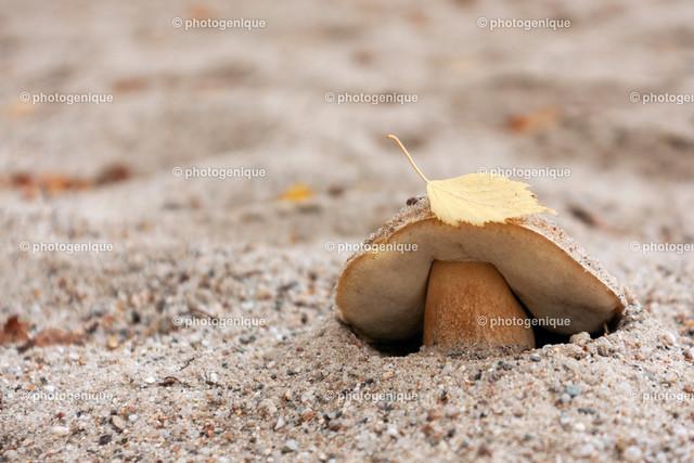 Steinpilz im Sand | kleiner Steinpilz im Sandboden mit einem gelben Blatt auf der Haube bei Tageslicht vor einem hellen Hintergrund mit Fokus auf dem Pilz
