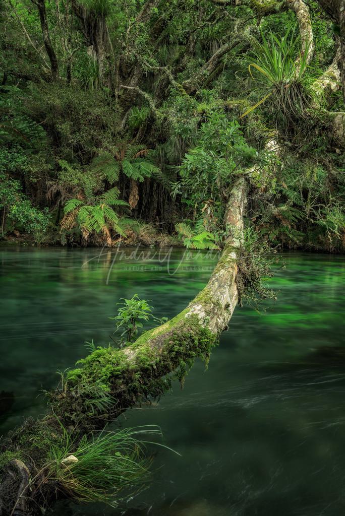 Idylle am Fluss