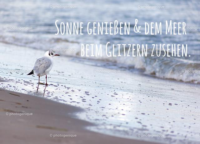 Sonne genießen und dem Meer beim Glitzern zusehen. | Postkarte, Grußkarte, Möwe am Strand bei Tageslicht, Text: Sonne genießen und dem Meer beim Glitzern zusehen. Foto: Annett Kämmerer