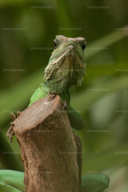 Echse | grüne Echse auf Baumstamm