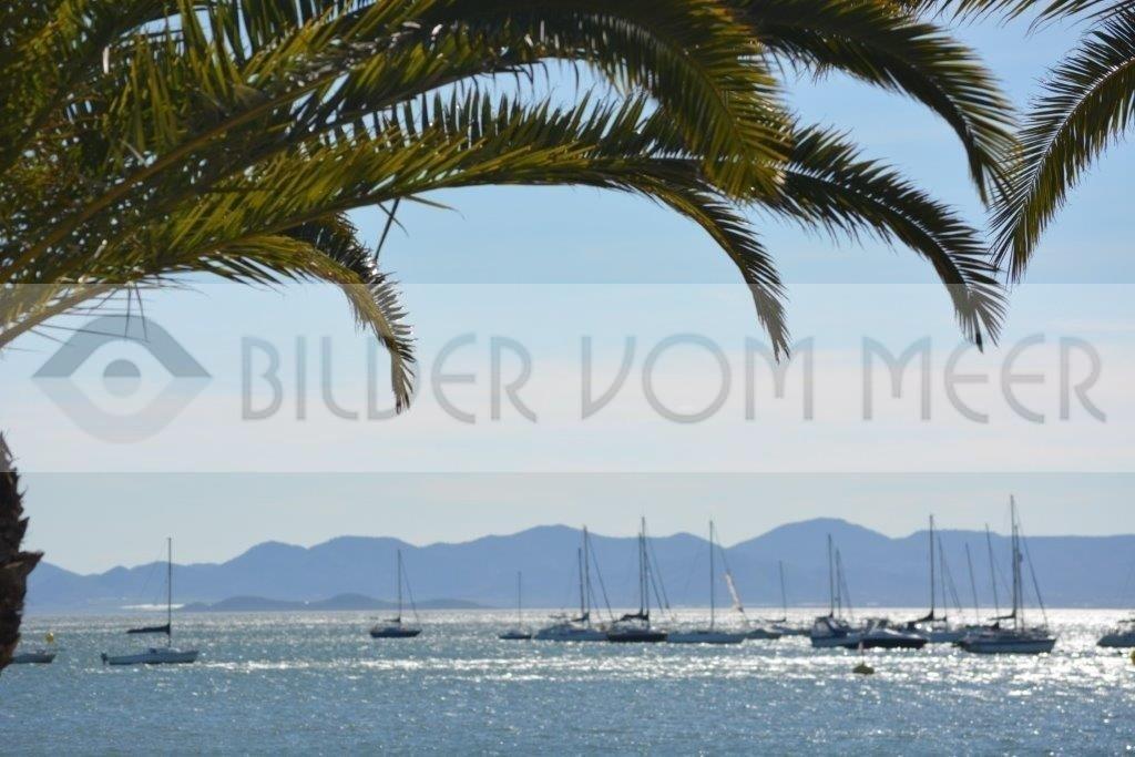 Bilder vom Meer | Palmen vor dem Meer