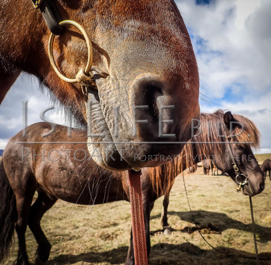 Pause | Reittour auf Island