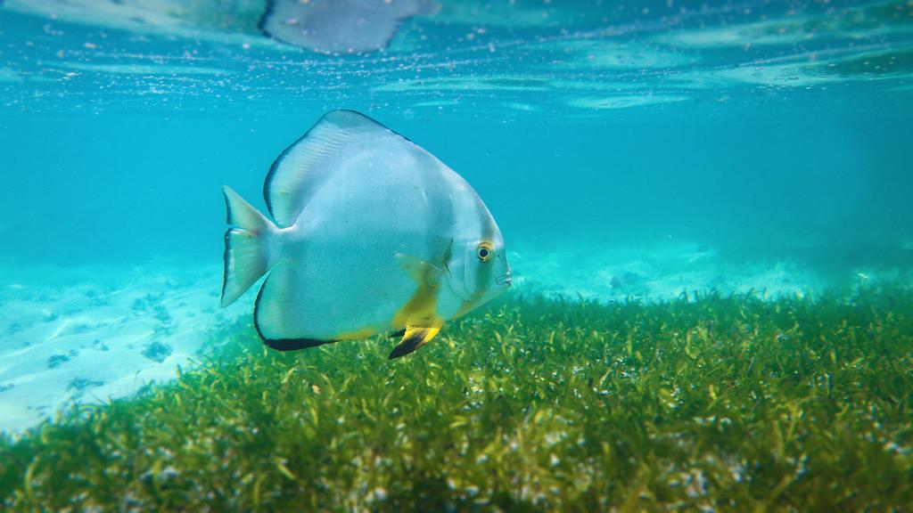 113-Seychellen-Fisch-2