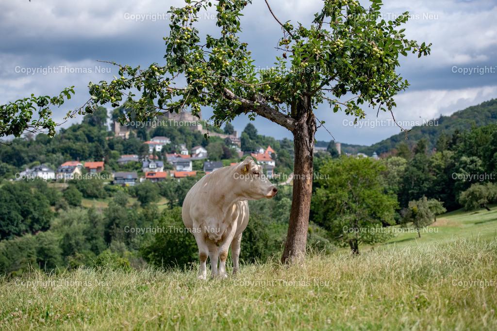 DSC_0208 | Lindenfels, wer sich von Fürth oder Ellenbach Lindenfels nähert dem bietet sich in der Nähe des neuen Infopunkt