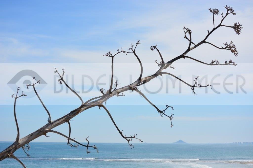Bilder vom Meer Spanien | Agave am Mar Menor