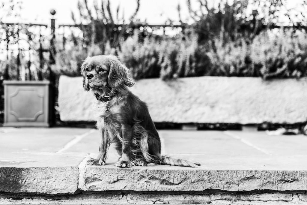 dogs--elmar.pics_5011