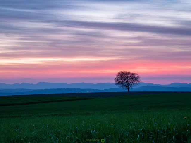 Tree   Baum in der blauen Stunde