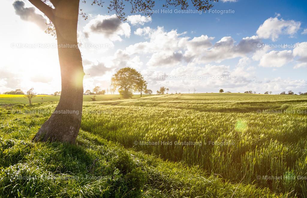 05 Mai | Felder bei Ottenhof | Sommersonne über Kornfeldern bei Ottenhof