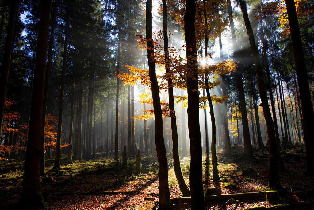 JT-181107-027 | Herbst, Nebel, die Sonne bricht gerade durch den Dunst, Landschaft, Wald, in der Nähe von Jagdhaus, Schmallenberg, Sauerland, NRW, Deutschland, Europa.