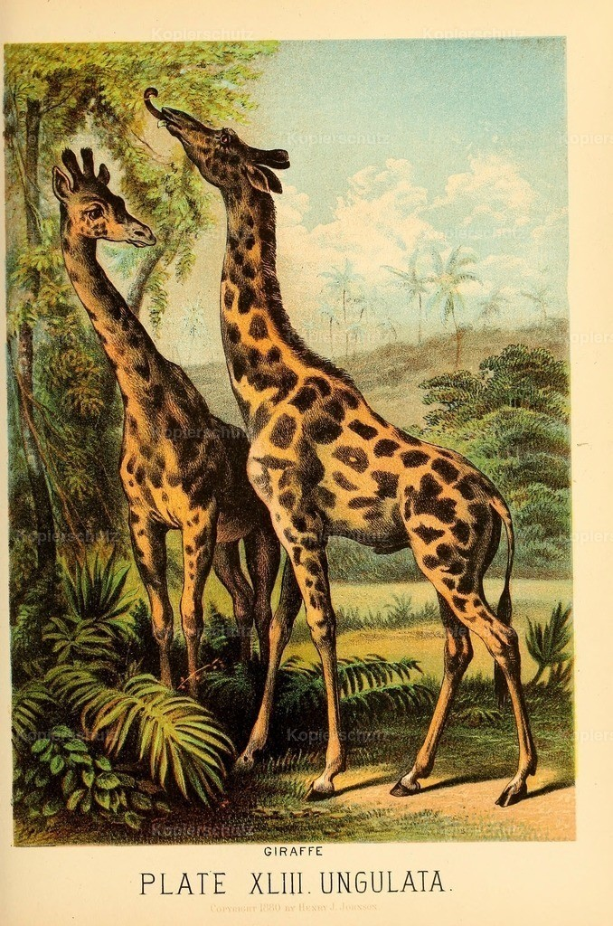Johnson_s- Household-Book- of-Nature-1880-(44)