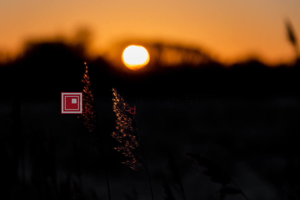 @_Marko_Berkholz_mberkholz_Natur_MBE9471