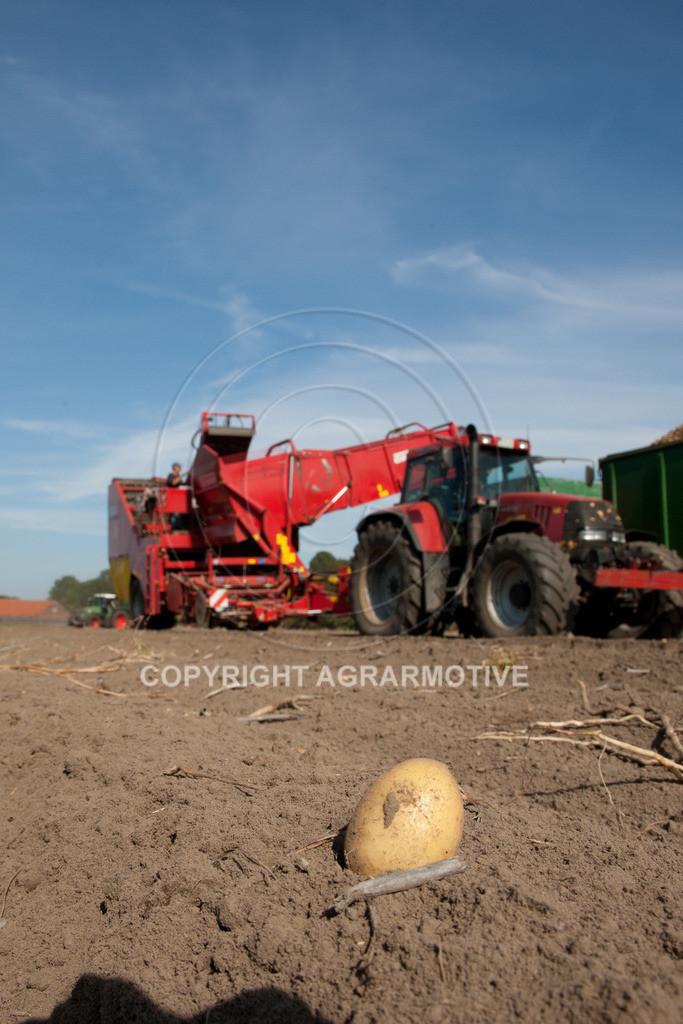 20110929-IMG_5836 | Ernte auf einem Kartoffelfeld - AGRARBILDER