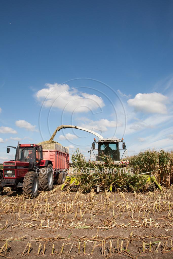 20080914-IMG_8989 | Silomais wird gehäckselt - AGRARFOTO Bilder aus der Landwirtschaft