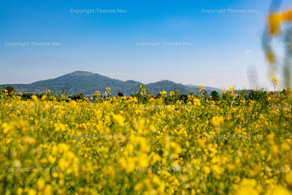DSC_9995 | Bensheim, Bergstrasse, Panorama, Rapsfelder, Schmuckbild, Melibokus, Auerbacher Schloss, ,, Bild: Thomas Neu