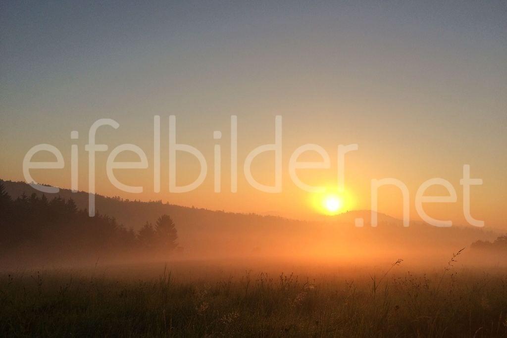 Sonnenaufgang in der Eifel | Farbspiel in zarten Pastelltönen - Sonnenaufgang im Morgennebel