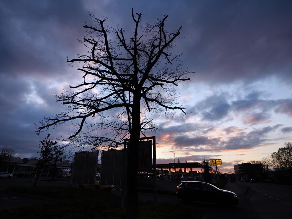Baum und Wolkenhimmel | Baum vor wolkigem Himmel an einem Nachmittag im Frühjahr in Bielefeld-Stieghorst.
