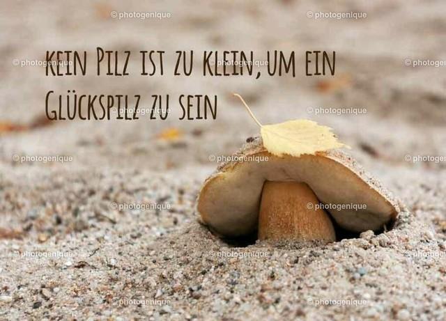 Kein Pilz ist zu klein, um ein Glückspilz zu sein | Postkarte Grußkarte kleiner gelber Pilz guckt aus dem Sand, Text: Kein Pilz ist zu klein, um ein Glückspilz zu sein