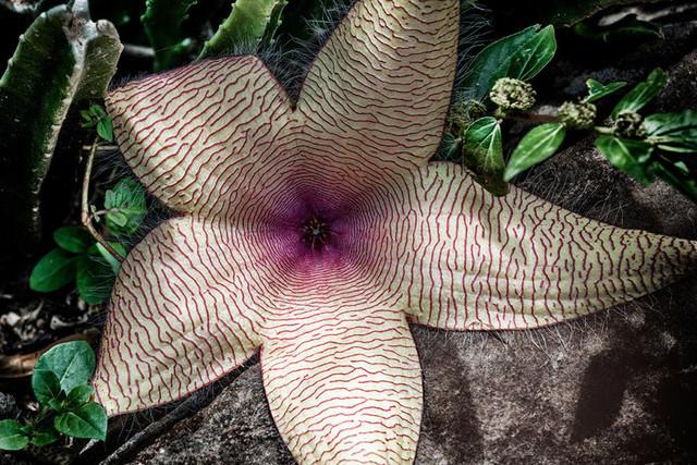 FLOWER   Kenya