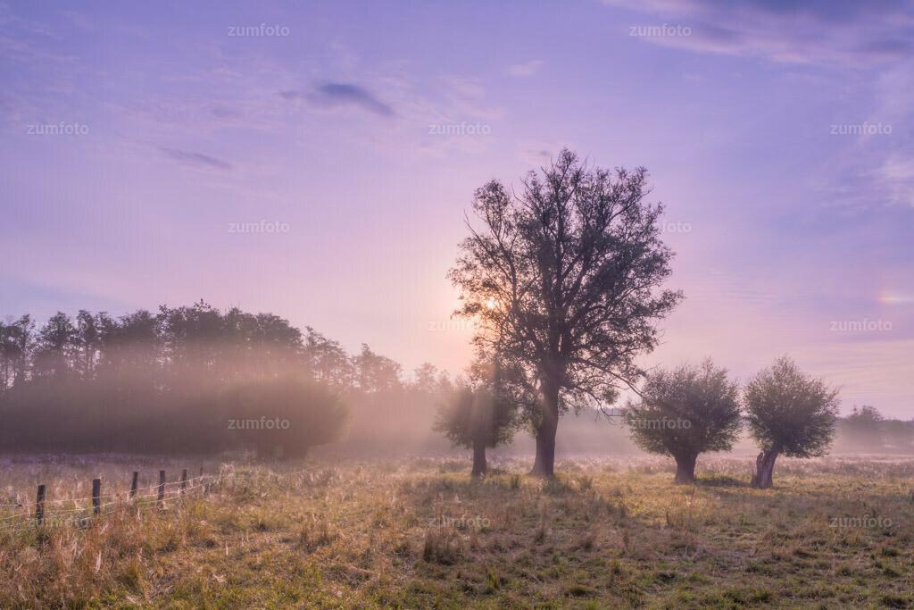 0-120805_0637-4366-77 | --Dateigröße 5760 x  3840 Pixel-- Aufnahmeort-- Koppel am Moorsee nahe der Fledermauspension. 53°28'17.047