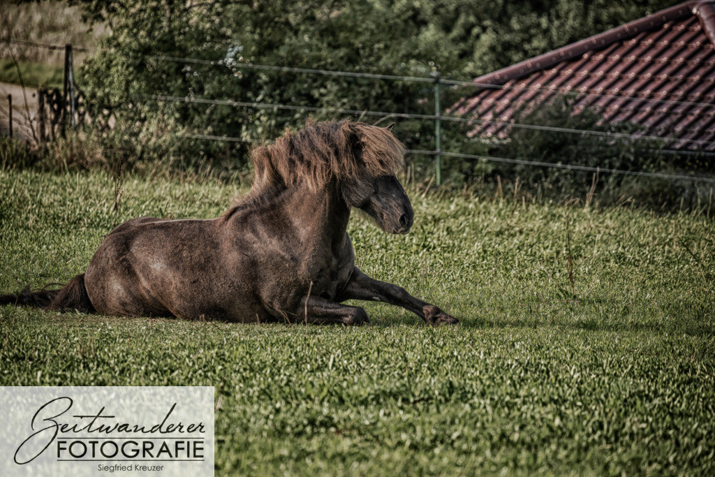 Thor Herde-0091hdr