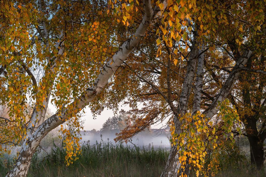 Herbstlaub am Morgen
