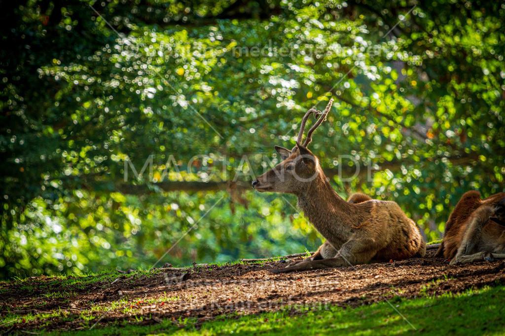 Wildpark-Kaiserslautern_20210918_0985
