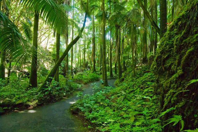 Lebensweg 08 | Unter Palmen Hawai'i Tropical Botanical Gardens, Big Island, Hawai'i