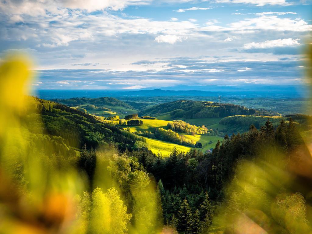 Hünersedel im Schwarzwald | Frühlingshafte Abendstimmung am Hünersedel bei Freiamt