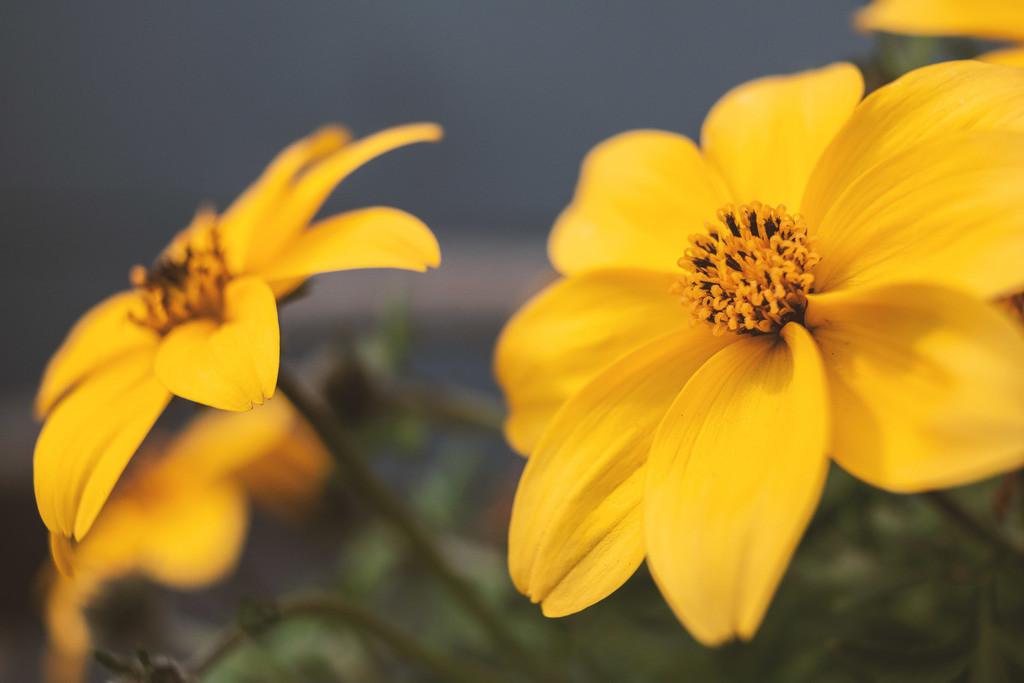 Blüte | Blumenmotiv