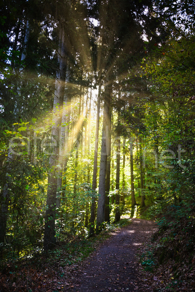 Lichtblick - Sonnenstrahlen im Wald | fotografiert im Kylltal  (Eifel, Vulkaneifel)