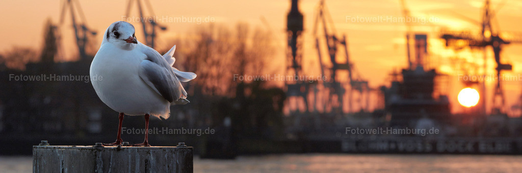 11691294 - Sonnenuntergang mit Möwe