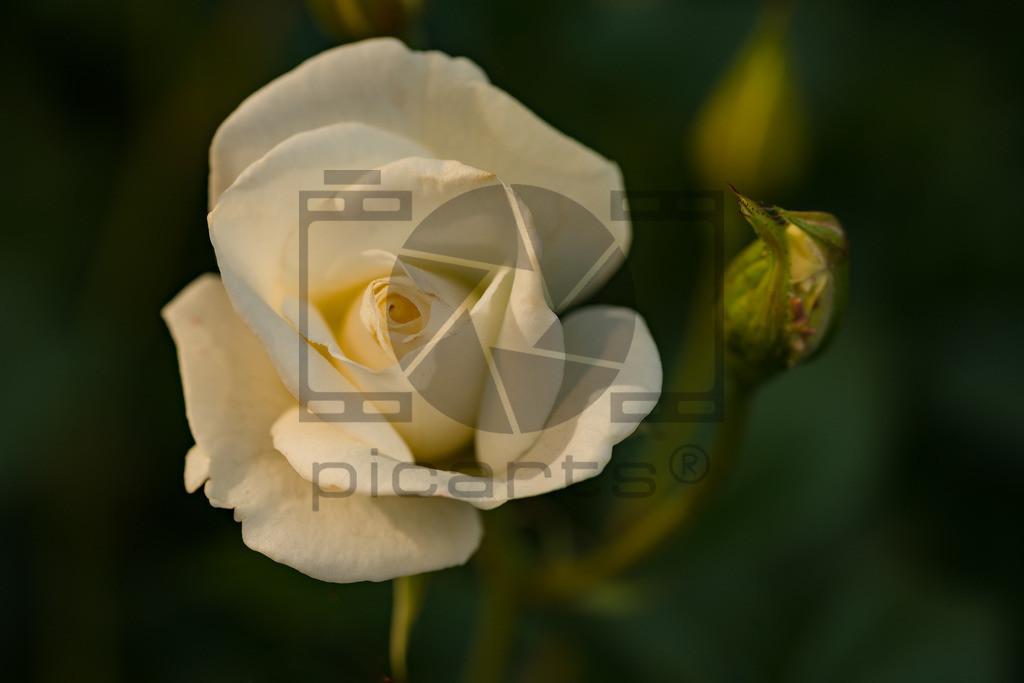 _DSC6459_Pictrs