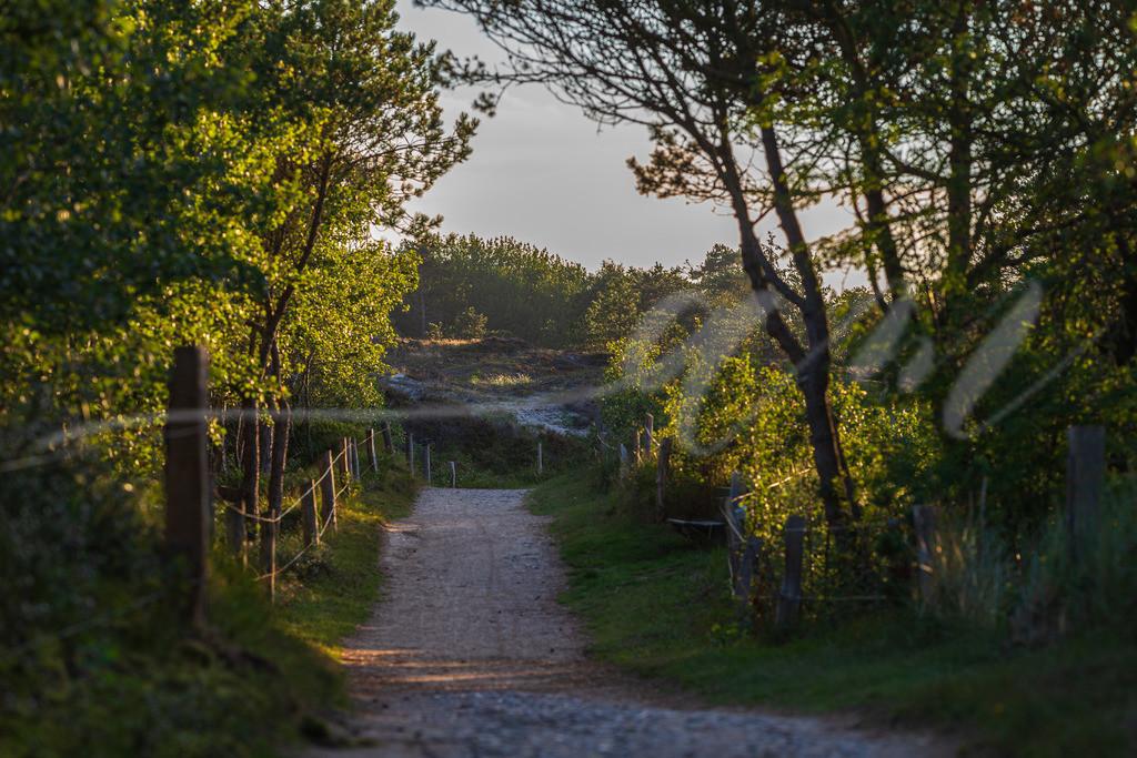 Mirs020-4135   kiefernwald, sankt peter-ording, waldspaziergang, heidelandschaft, kiefern, heide, weg, spazierweg