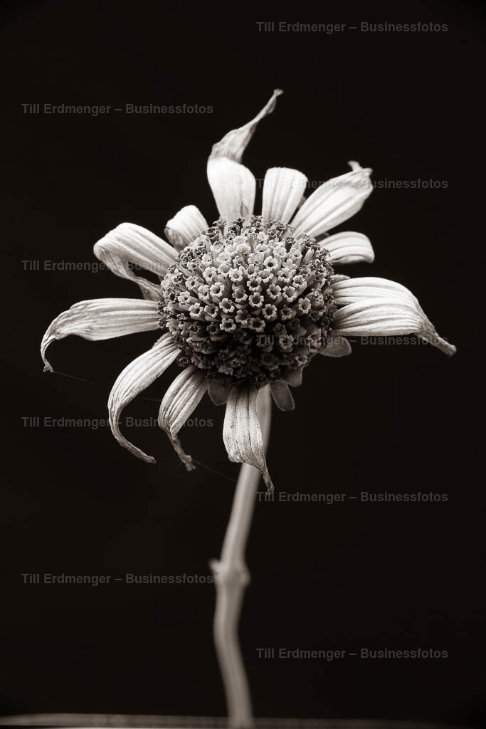 20190906_Herbstblüten_0063